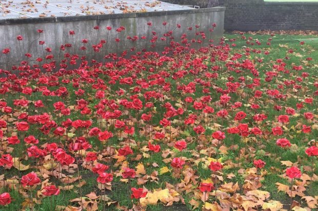 Picture of poppies growing outside the Imperial War Museum